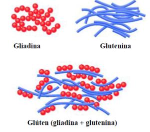 gluten formula
