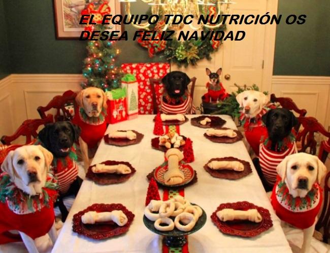 feliz-navidad-equipo